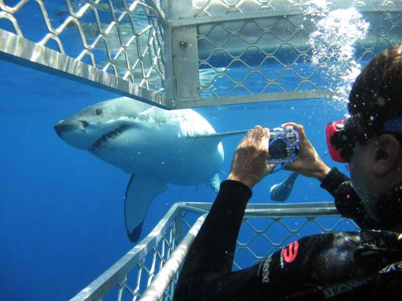shark diving companies