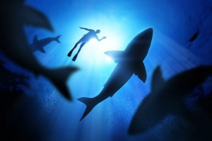 Shark-Diving-Cape-Town